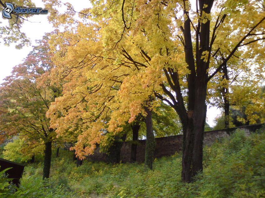 árboles amarillos, otoño, muro