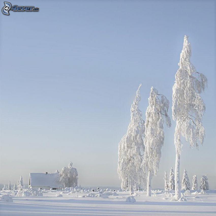 árboles congelados, casa cubierta de nieve