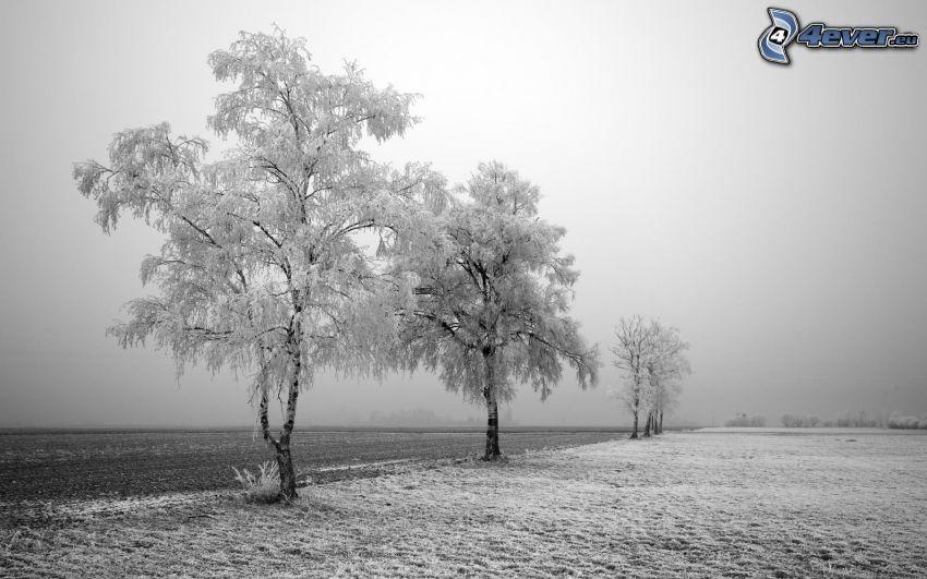 árboles congelados, nieve, campo
