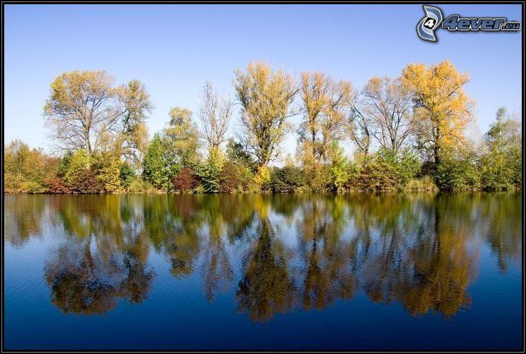 árboles de otoño por el río, líneas de árboles, árboles amarillos, reflejo, lago, nivel de aguas tranquilas