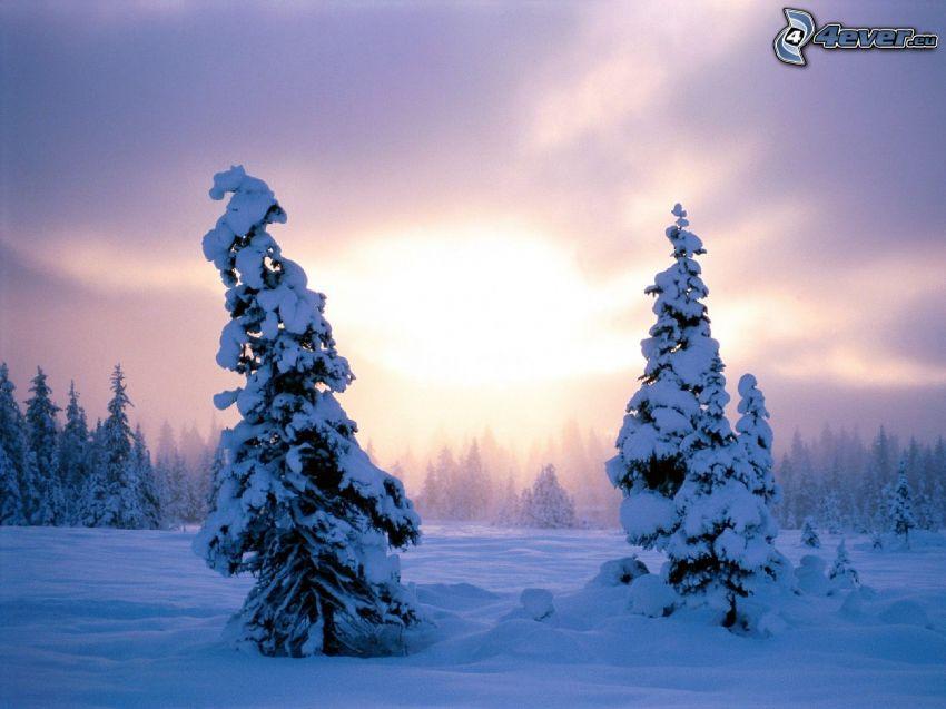 árboles nevados, cielo púrpura