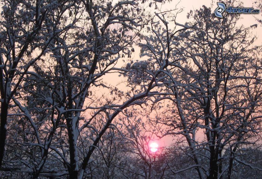 árboles nevados, puesta de sol de invierno