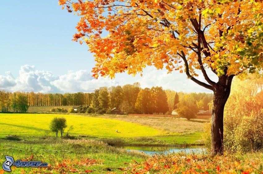 árboles otoñales, prado