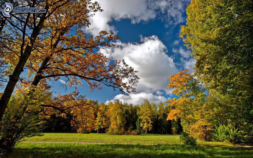 árboles otoñales