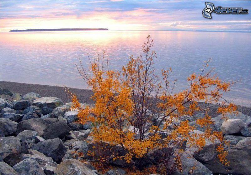 arbusto, costa de piedra, rocas, vista al mar, puesta del sol