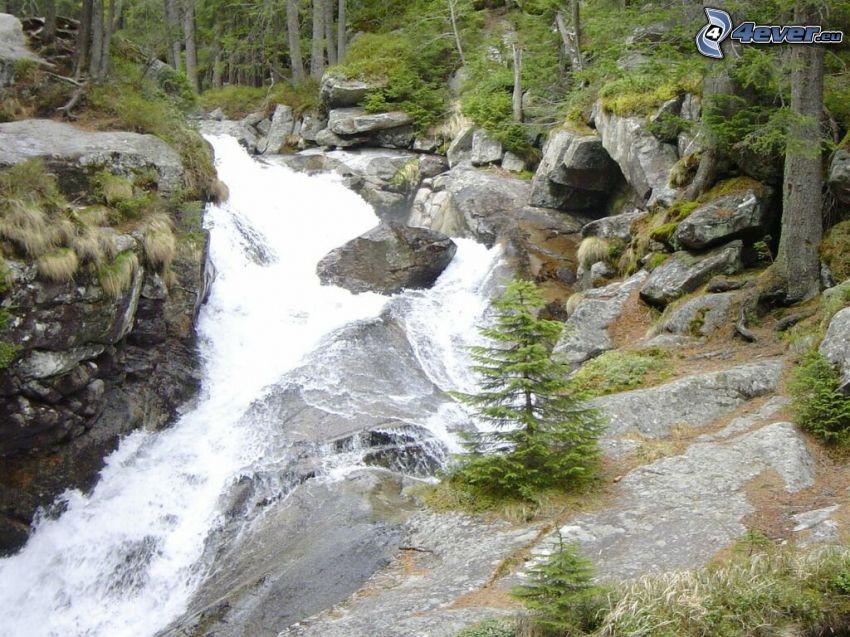 arroyo de bosque salvaje, Alto Tatra, rocas, bosque