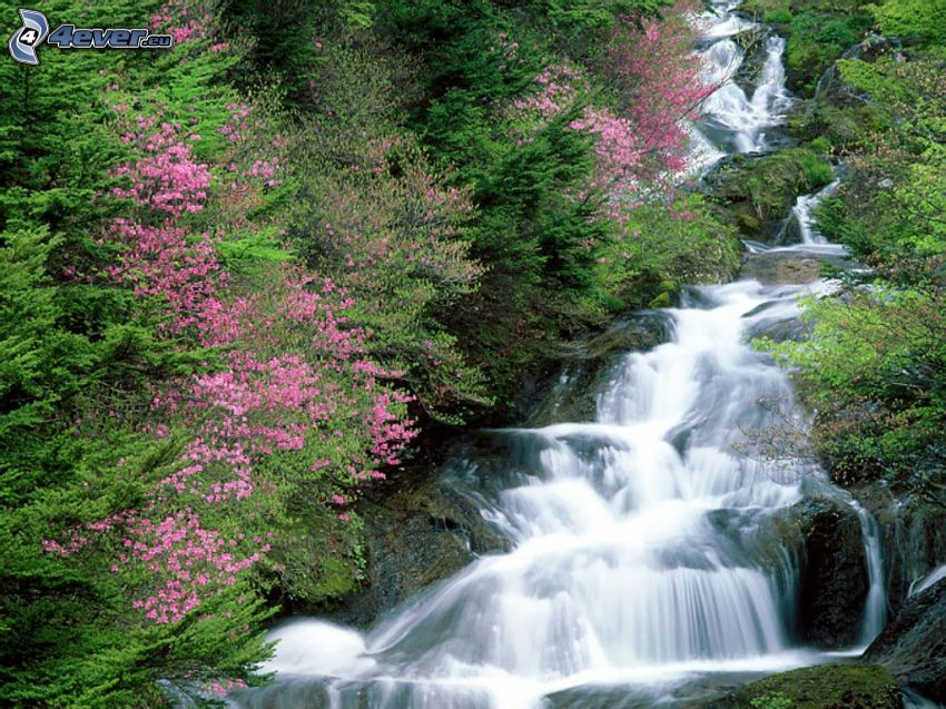 arroyo de bosque salvaje, árboles