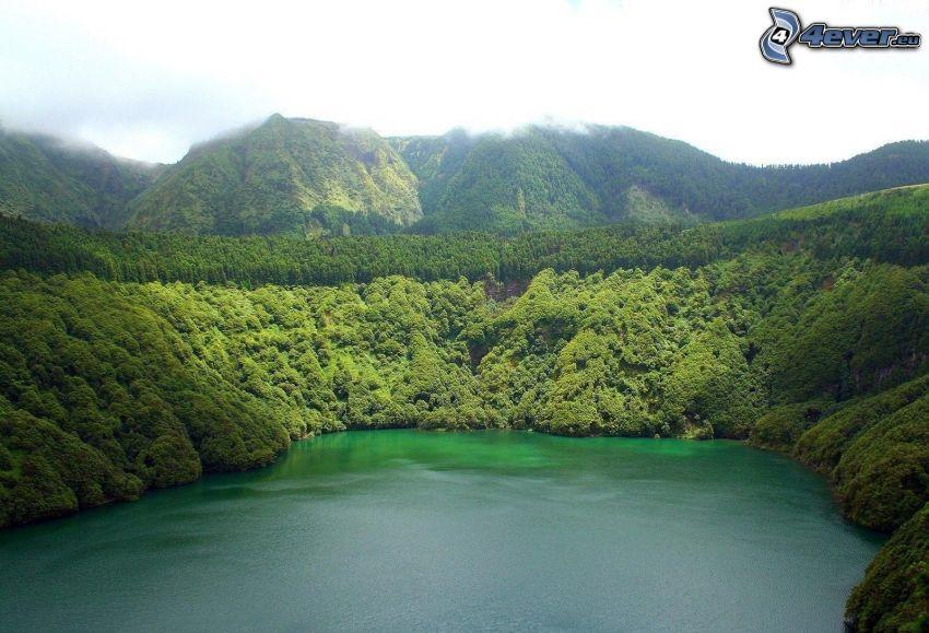 bahía, montañas, bosque