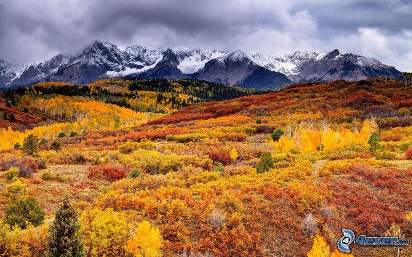 bosque, amarillo de otoño, colinas en otoño, montañas