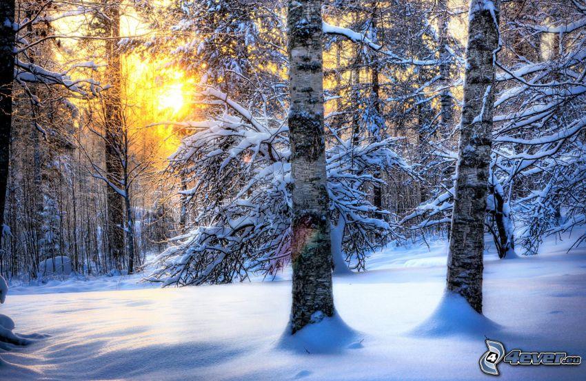 bosque nevado, puesta del sol en el bosque