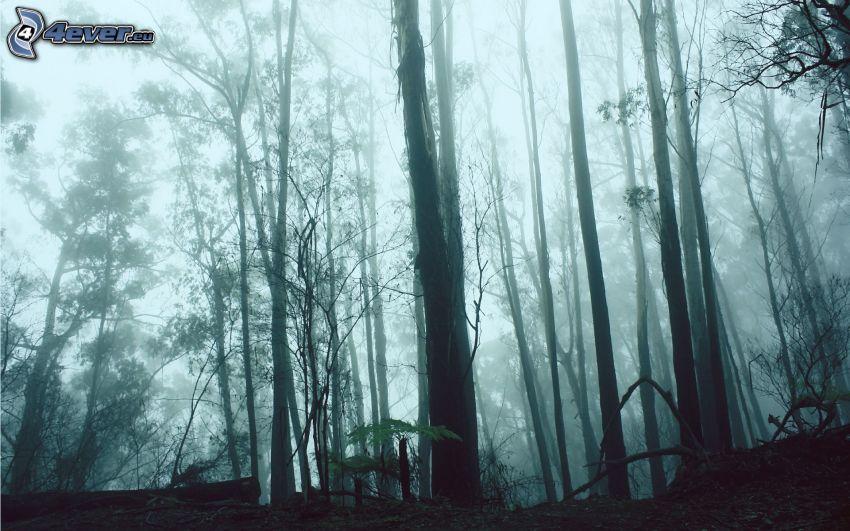 bosque oscuro, niebla