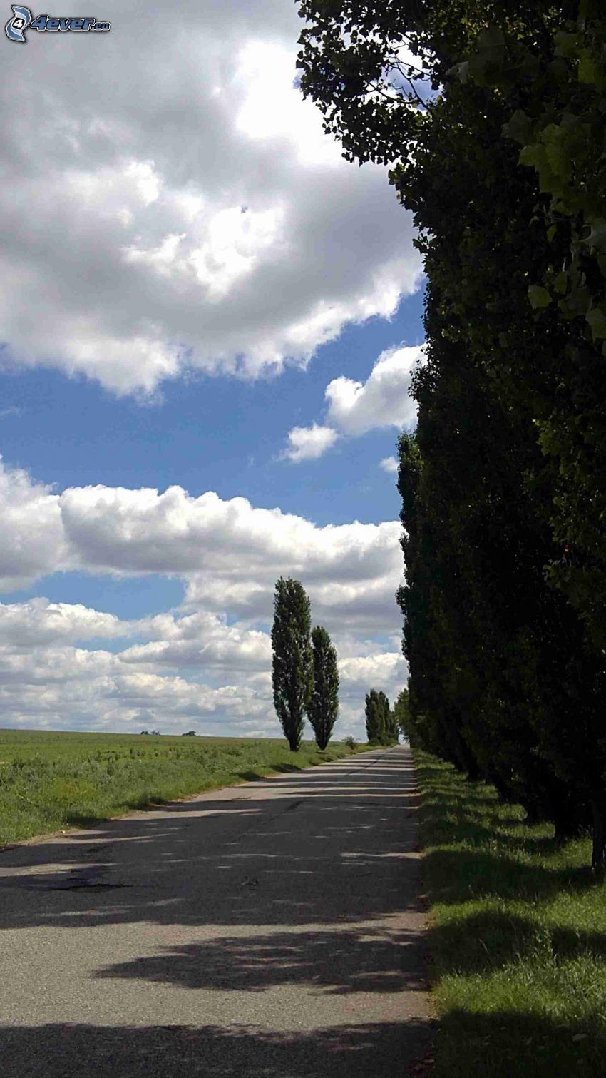 camino, arboleda, nubes