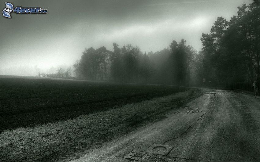 camino, niebla, bosque, campo