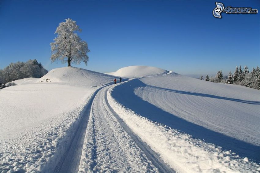 camino cubierto de nieve, árbol solitario, árbol nevado, turistas, bosque nevado, nieve