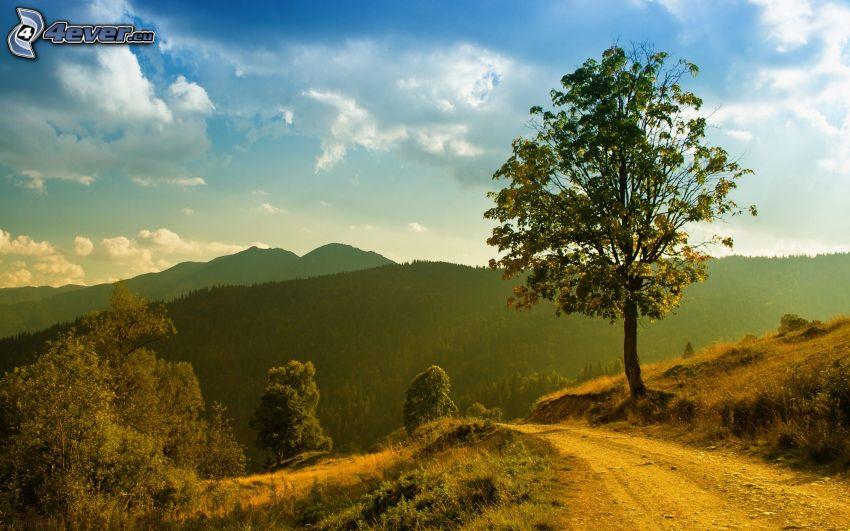 camino de campo, árbol solitario, montañas