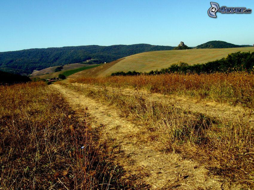 camino de campo, campo, hierba seca