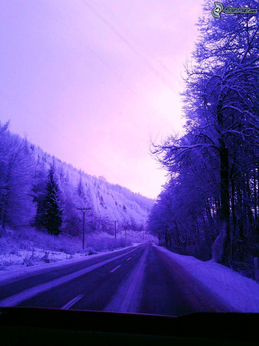 camino por el bosque, carretera de invierno, invierno, bosque, árboles congelados, bosque congelado