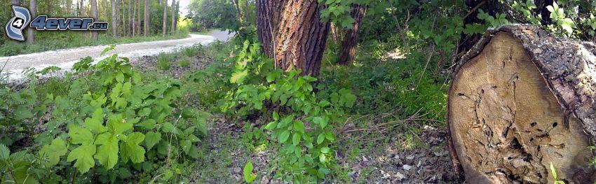 camino por el bosque, tribu, árboles, verde