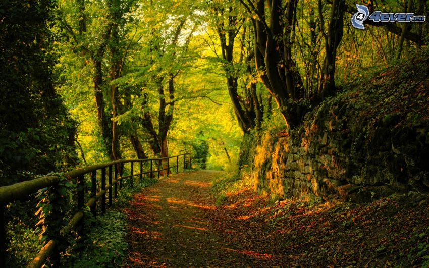 caminos forestales, barrandilla, árboles, hojas de colores