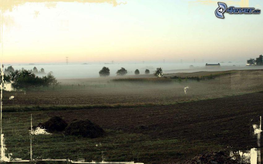 campo, niebla baja