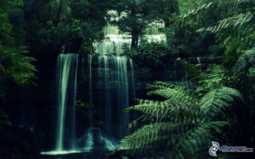 cascada, verde, helechos