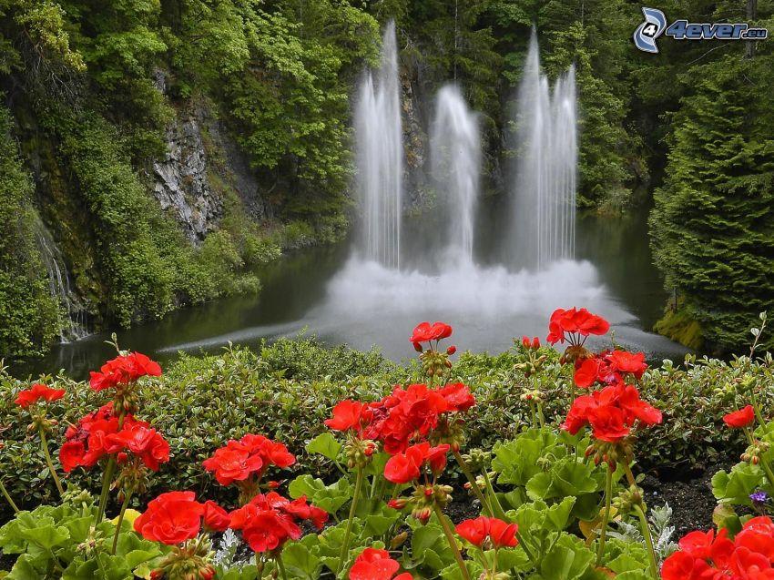 Cascada en el bosque, flores rojas