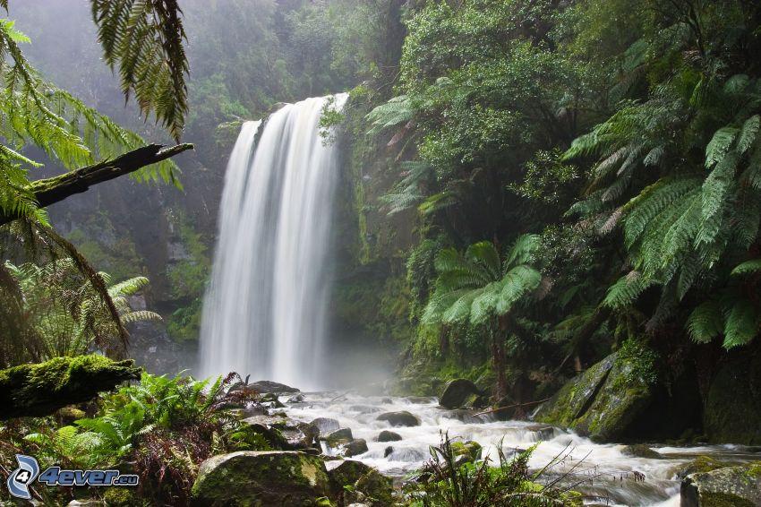Cascada en el bosque, verde, río, corriente, helechos