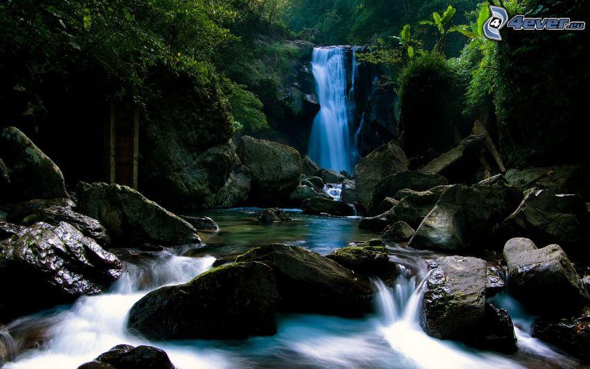 cascada en la selva, corriente, selva