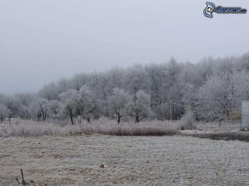 choza, bosque, nieve, cielo