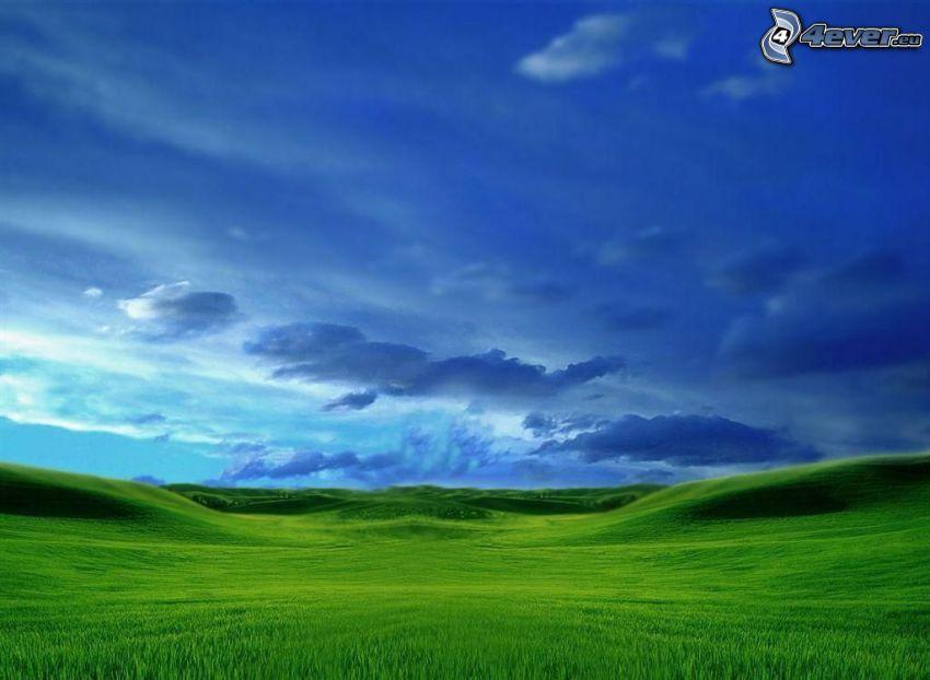 cielo, prado, campo, nube
