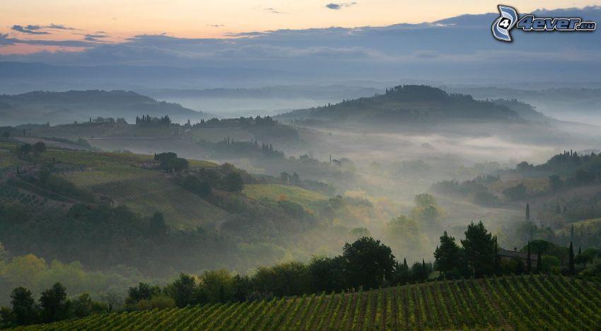 colina, viña, niebla baja, atardecer