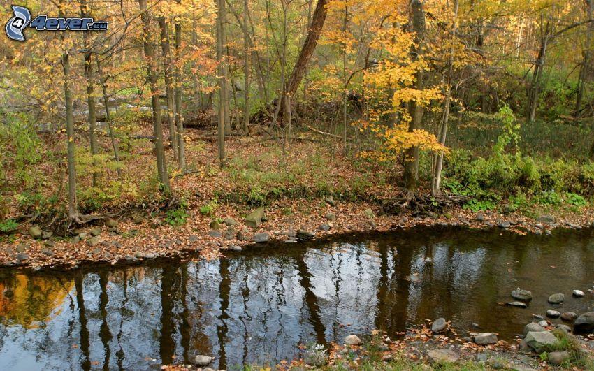 corriente, bosque, hojas de colores, otoño