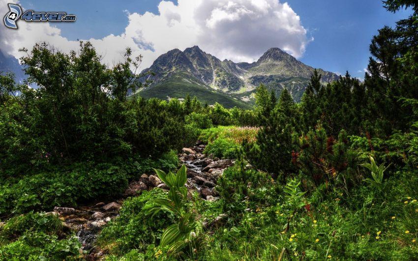 corriente, montaña rocosa, árboles, verde