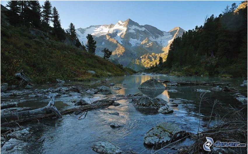 corriente, piedras, árboles coníferos, montañas nevadas