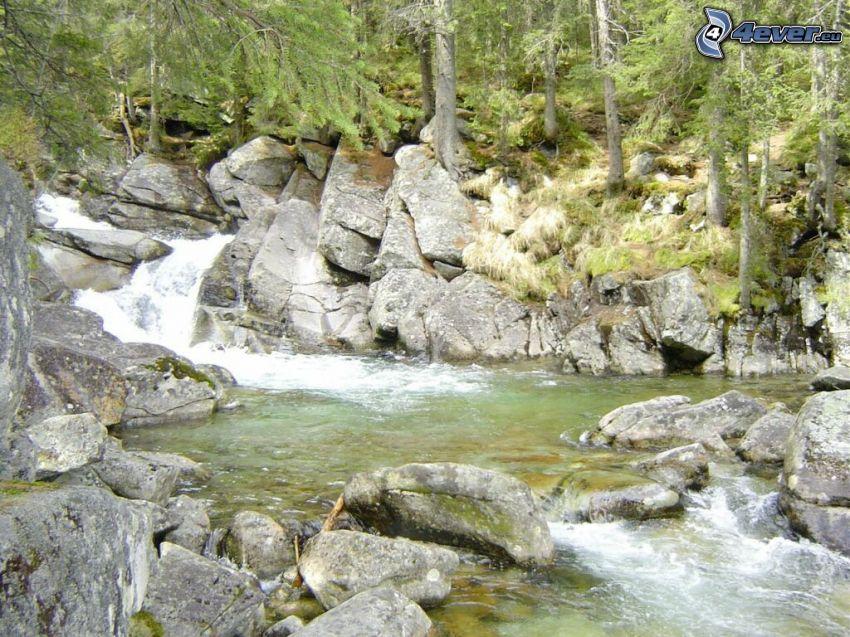 corriente que pasa por un bosque, Alto Tatra, rocas