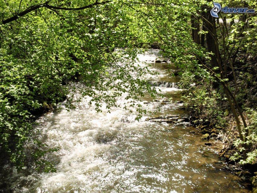 corriente que pasa por un bosque, árboles, bosque de Šumava