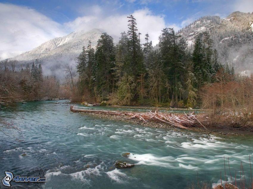 corriente que pasa por un bosque, río, árboles coníferos, montañas nevadas