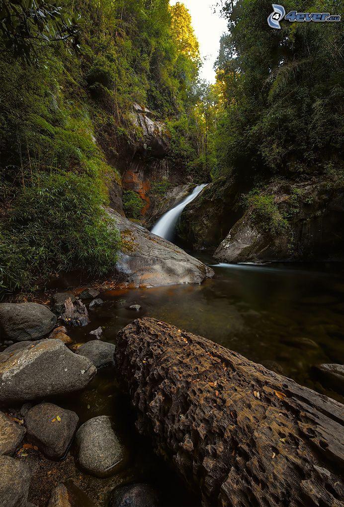corriente que pasa por un bosque, rocas, árboles, tribu
