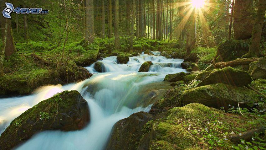 corriente que pasa por un bosque, rocas, musgo, sol