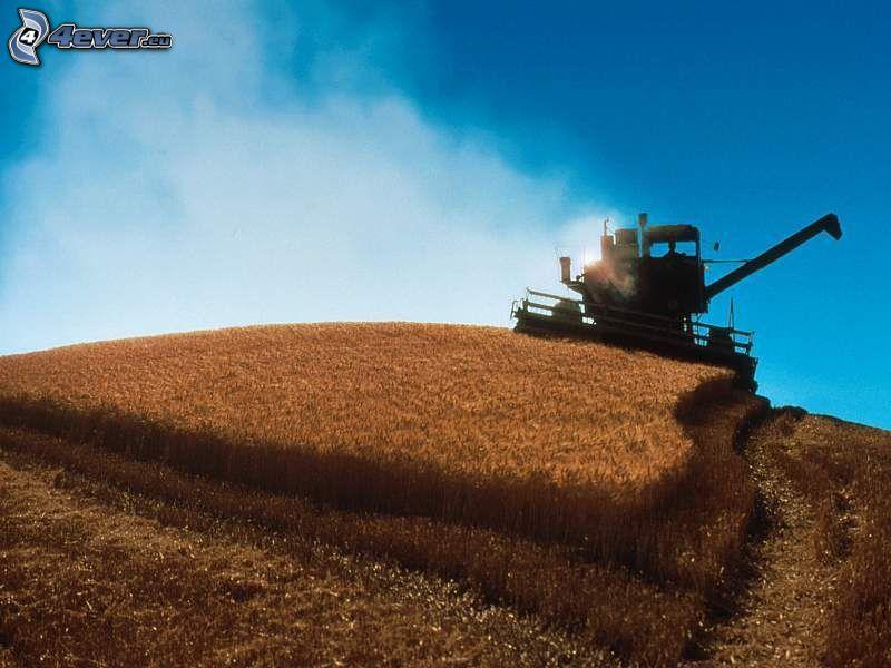 cosechador, campo, grano, cielo