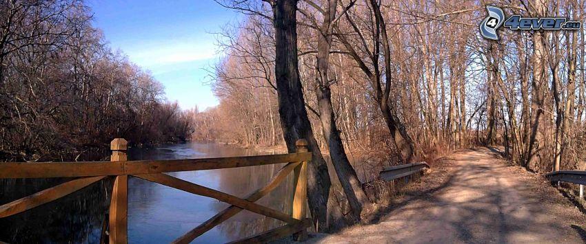 Danubio bajo, camino, árboles secos