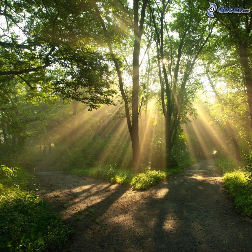 encrucijada, rayos de sol en el bosque, verde