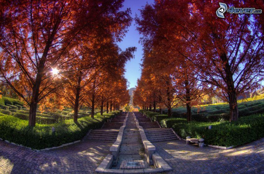 escalera, árboles coloridos del otoño, sol, Japón