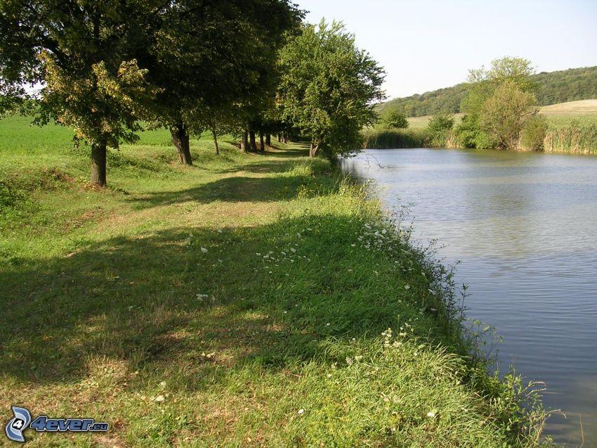 estanque, acera, árboles de hoja caduca, prado