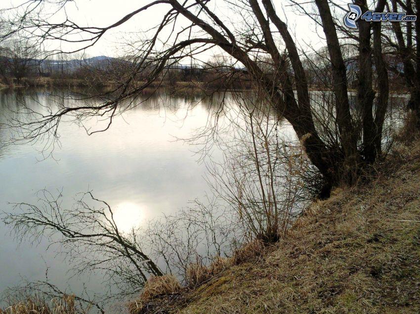estanque, bosque de Šumava, lago, agua
