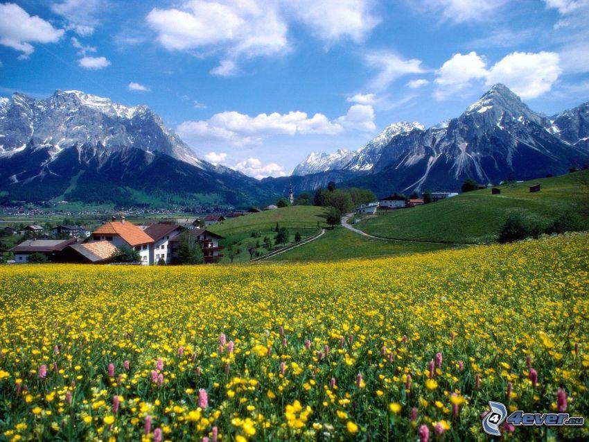 flores amarillas, prado de verano, Francia, montañas