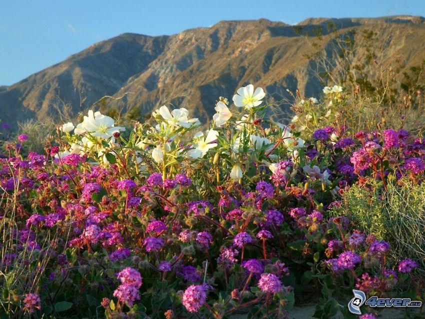 flores silvestres, vista, montañas