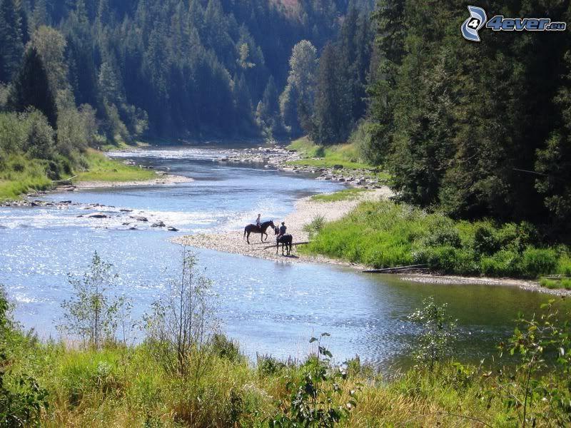 jinetes, río, bosque, naturaleza