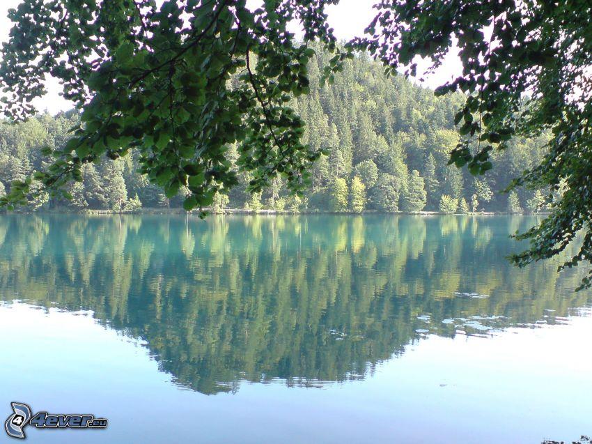 lago, árboles, reflejo