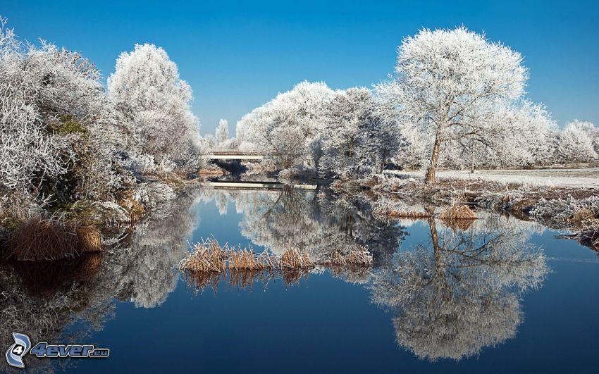 lago, árboles congelados, reflejo